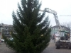 christbaum_2